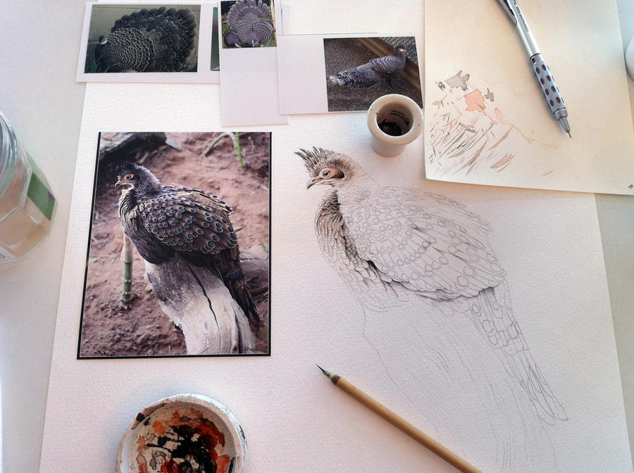 Wildlife art workshop by Heliocyan