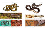 Snake field guide / final layout
