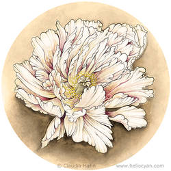 Flower by Heliocyan