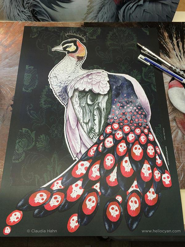 Peacock by Heliocyan