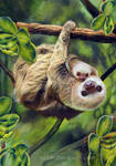 Two Toed Sloth and her baby
