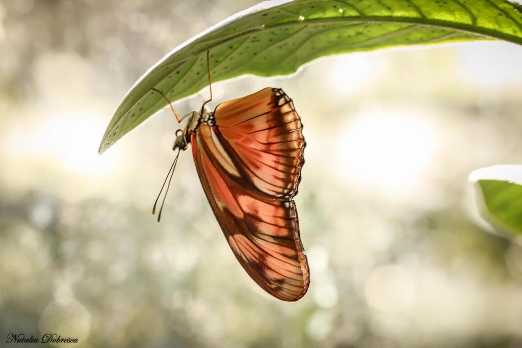 Butterfly hold on... by mydarkeyes