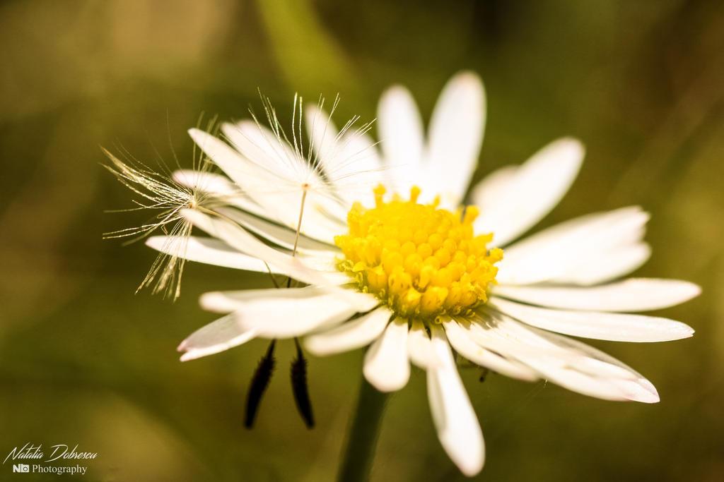 Friends of a daisy by mydarkeyes