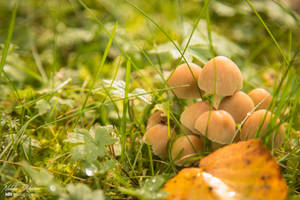 Mushrooms by mydarkeyes