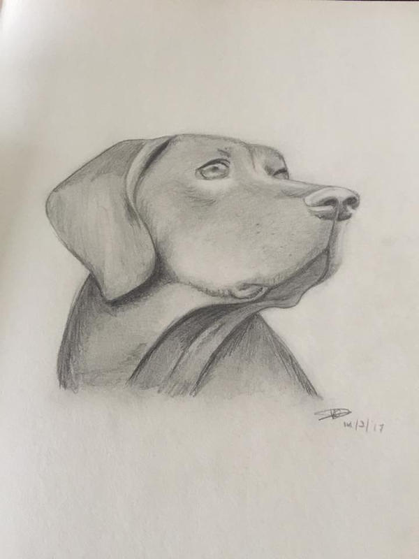 Dog Pencil Shading By Fromskretch On Deviantart