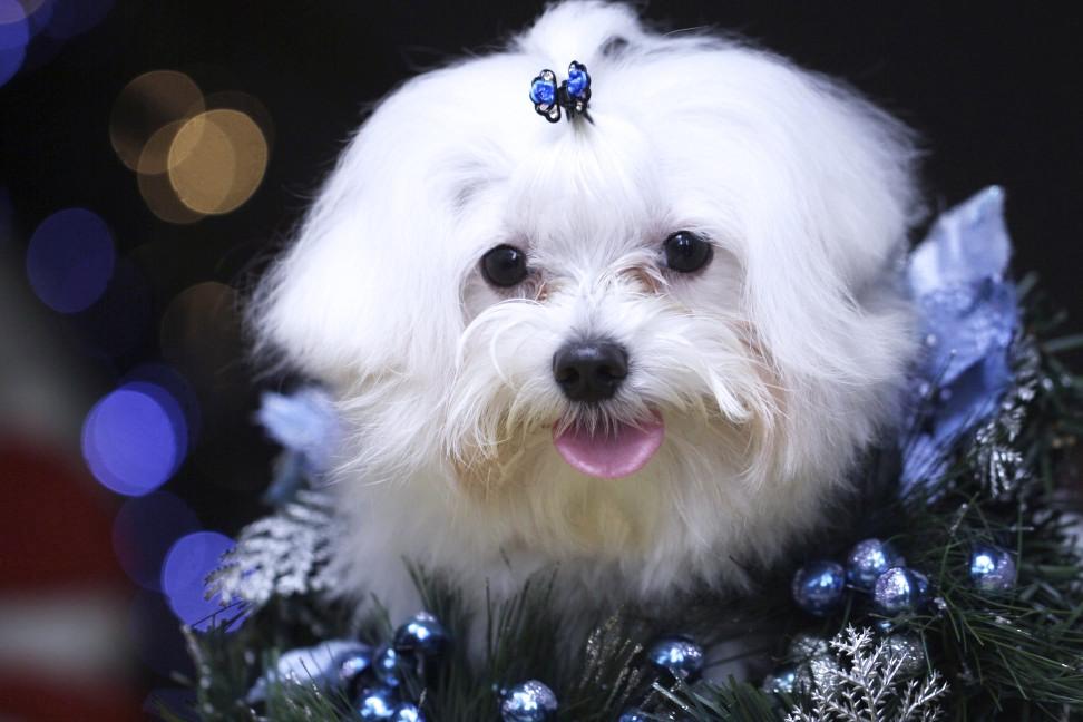 Merry Christmas by Kizuka-Kirasaki