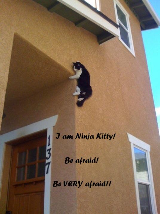 http://fc07.deviantart.net/fs70/f/2010/322/c/a/ninja_kitty_by_mysticbren-d333dac.jpg