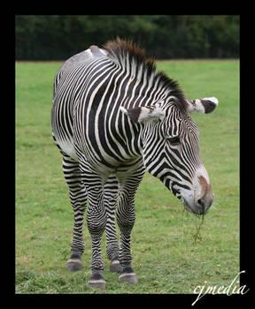 When Eeyore wore Stripes