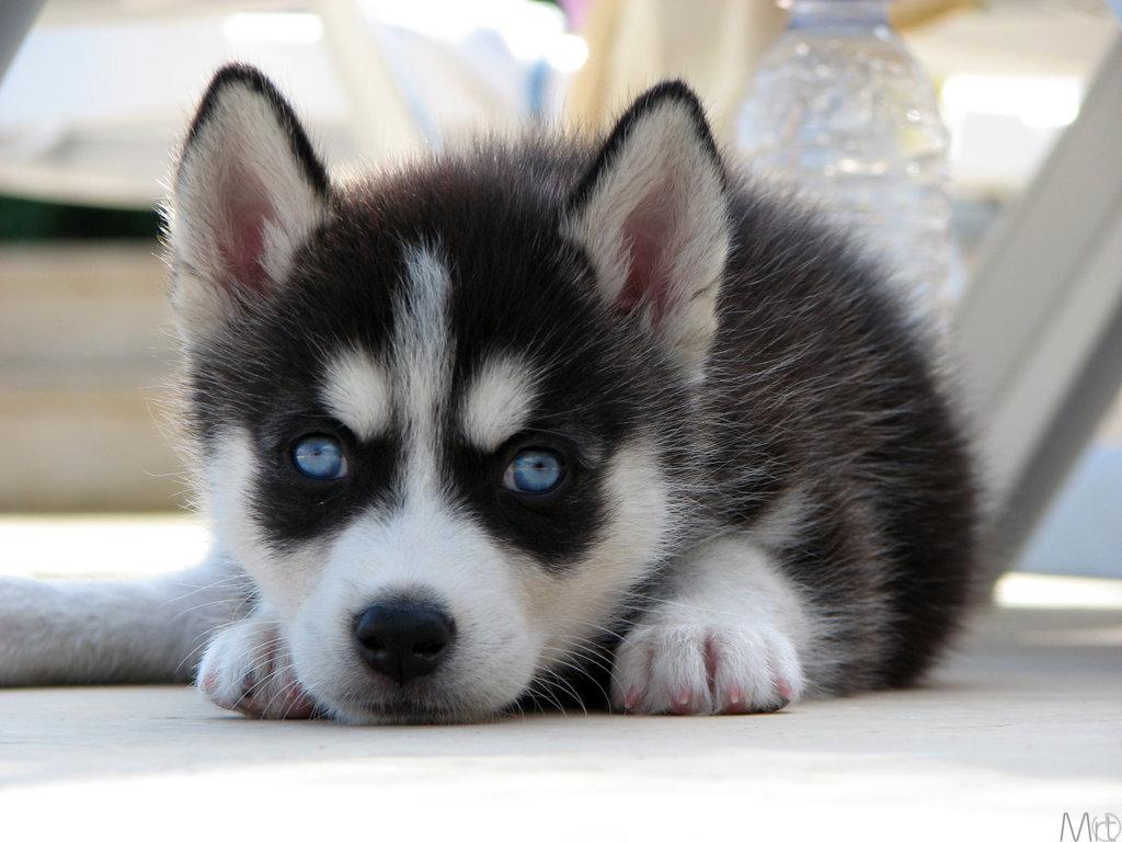 I Want To Train My Dog