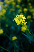 Flower 1 in colour by tysmin