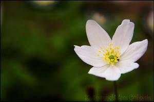 Flower 2 by tysmin
