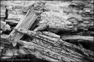 Wood by tysmin