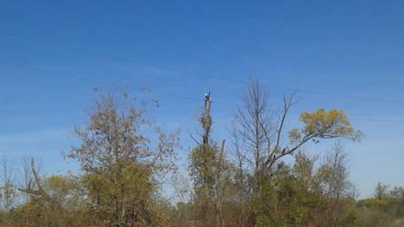 Spotted a Bald Eagle by ShockWaveX2