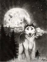 Wolf by AshyMashy