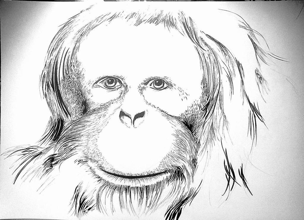 Ape by DarkstarDani
