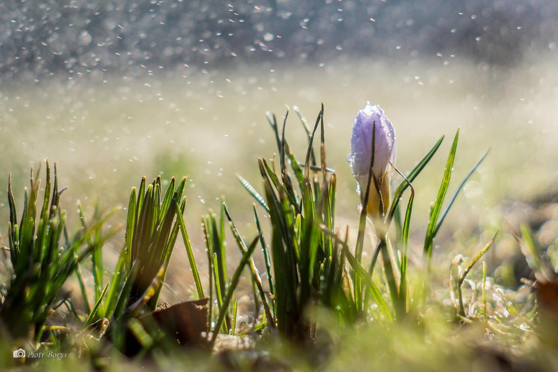 The spring is coming! by utak3r