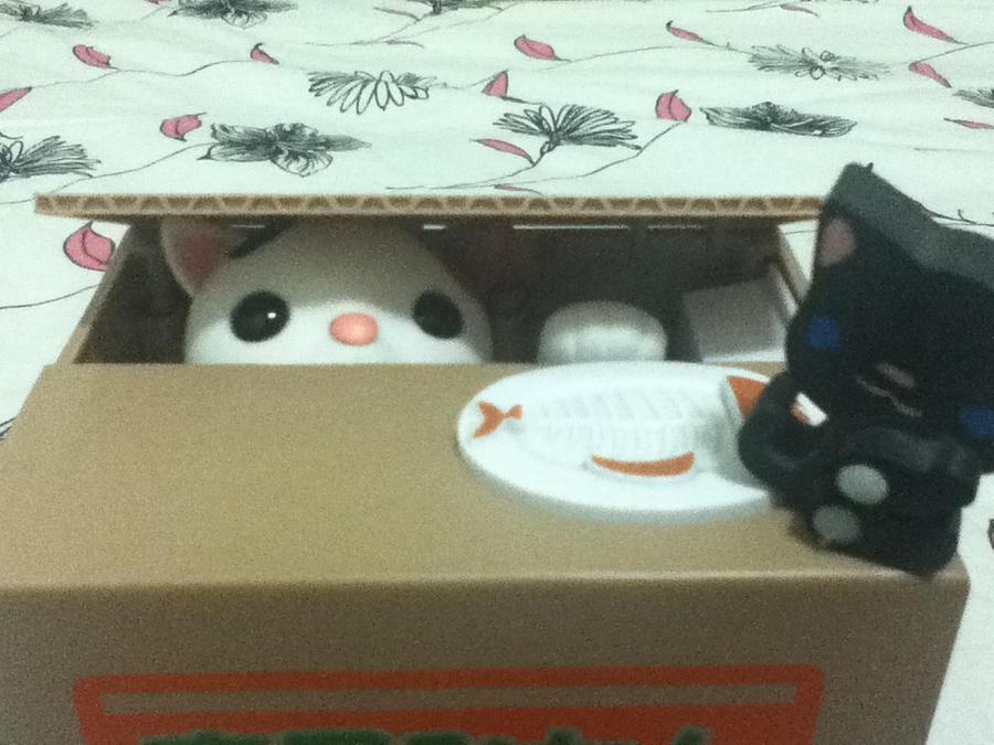 Cats in my room! Felins Overload!! by Darkwolf19