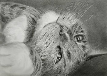 My Monkey Kitty by E1969R
