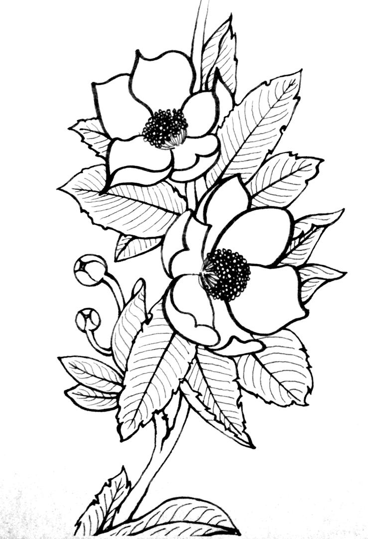 Magnolia Flower Line Drawing : Magnolia line drawing by randomdream on deviantart