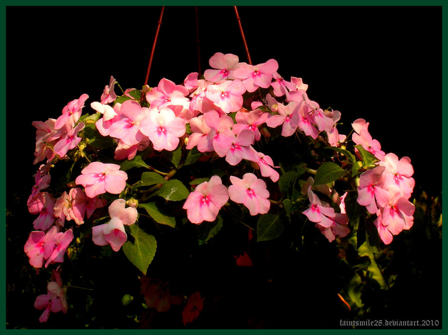 pink hanging flowers by faintsmile28 on deviantart