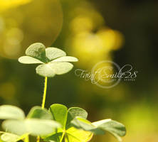 My Clover field by faintsmile28