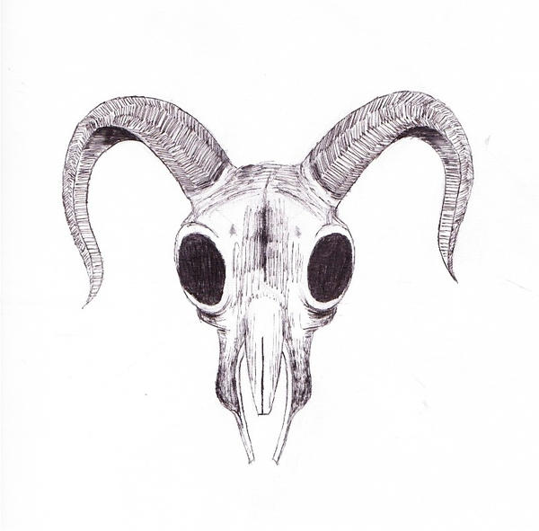 Sketchbook Goat Skull By Mortalscum On Deviantart