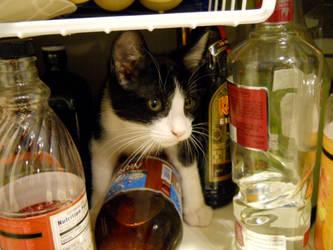 Alcoholic Kitty by cosplayobsessedfreak
