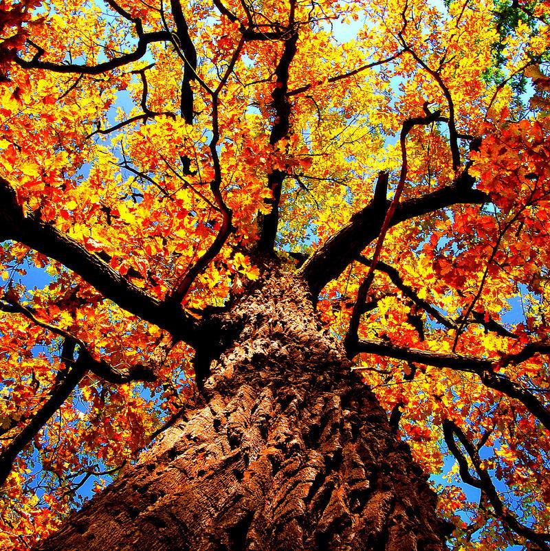 Jesiennie vol. 2 by buyniasty