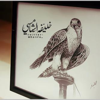 Falcon - UAE by khalifaAlShamsi