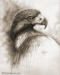 Eagle by rebekahlynn