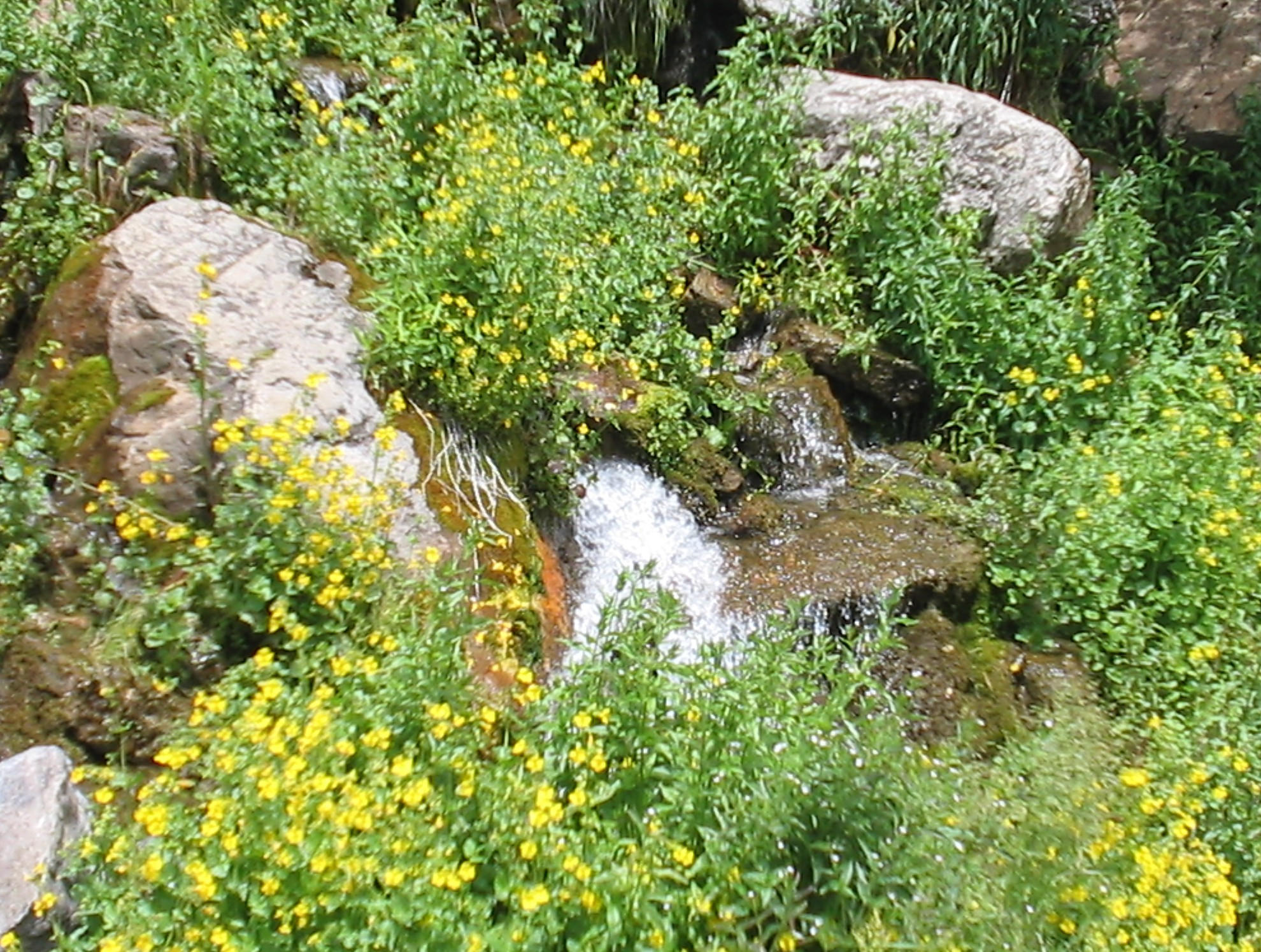 waterflow chat sites A source for information on the san antonio water system, including conservation, employment and contact information.