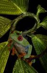 treefrog typography by fuzzyzebra