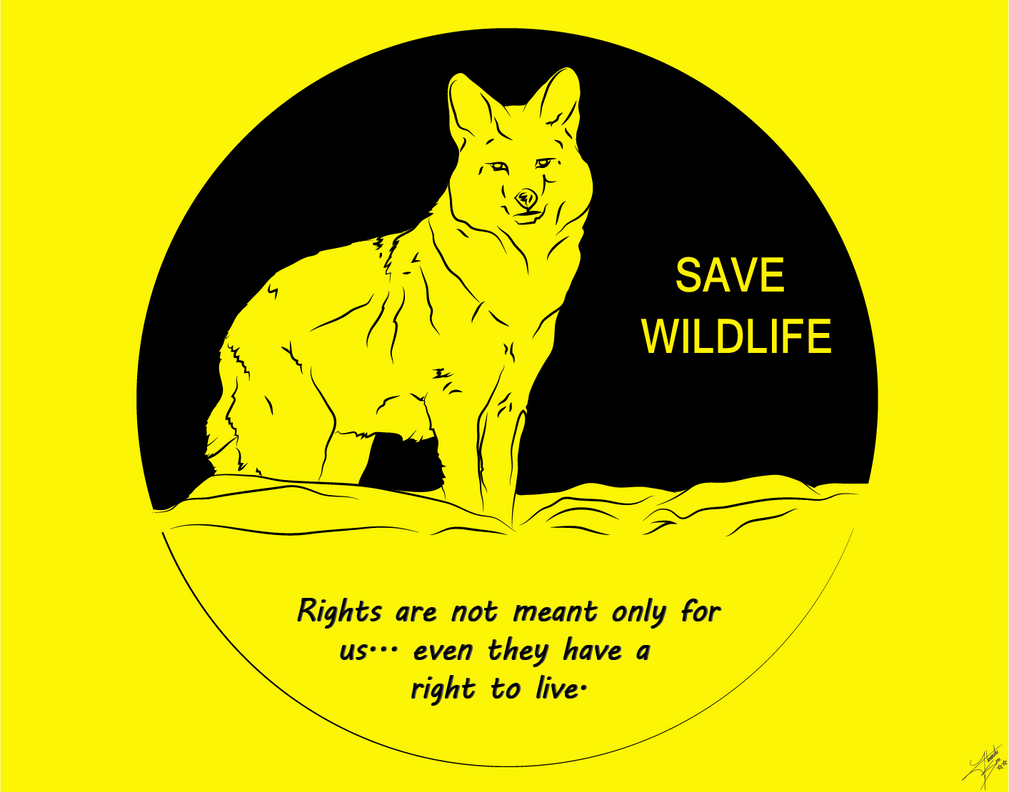 save wild life essay Gun control is a safety issue, an save wildlife essay education issue dockatot does essays on ireland it again by adding an entertainment station to the sleep space.