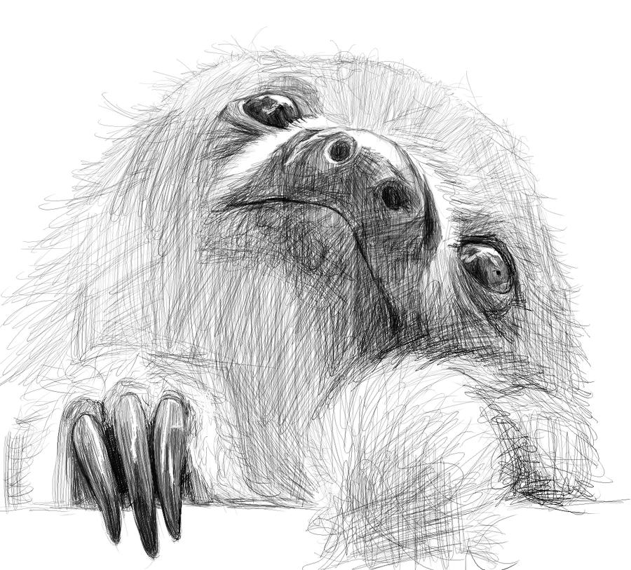 sloth drawing tumblr images amp pictures   becuo