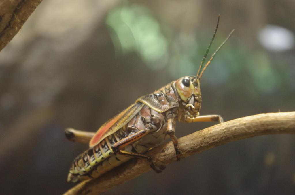 Grasshopper by mariannemason on DeviantArt