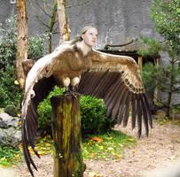 Human Powered Flight by Mertail