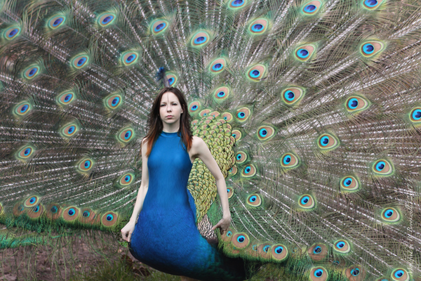 Pretty as a Peacock by Mertail