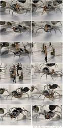 A Dozen Delightfully Dangerous Driders by Mertail