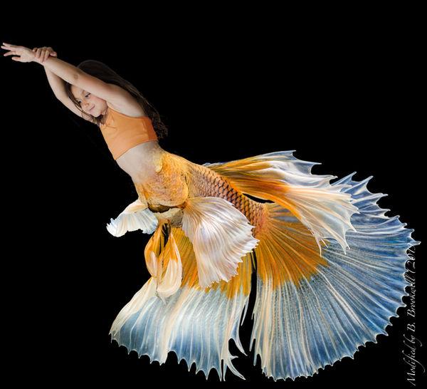 Young Betta Mermaid