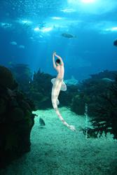 The Aquarium's Mermaid (DA)