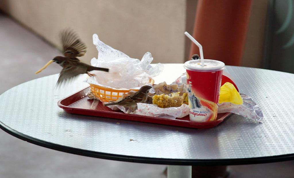 Disneyland Birds by LlladnaR