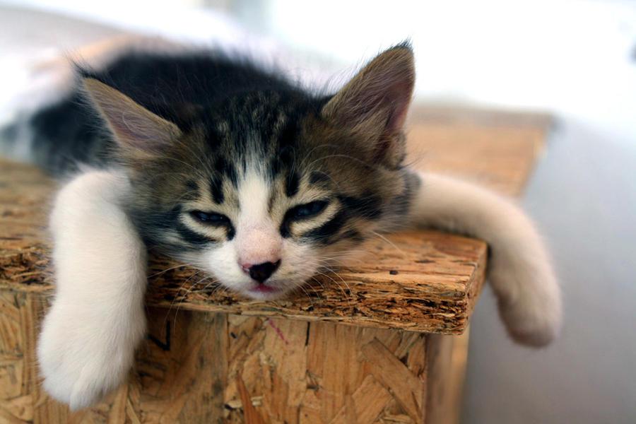 Please don't wake me by BlueCatsWearHats