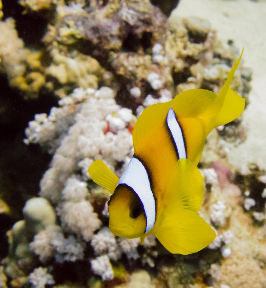 Nemo by iSeriouslySuckAtArt