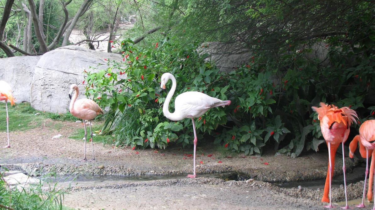 20 Fun Facts About Flamingos - Bird Trivia - The Spruce