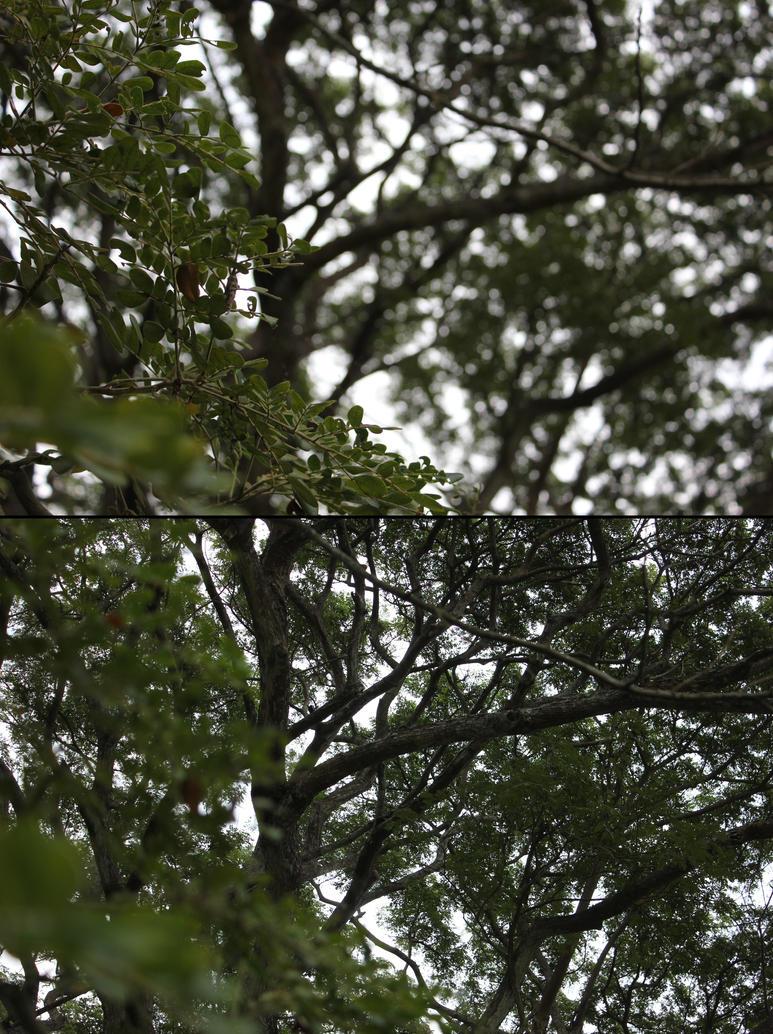 Those Blurry Leaves by costaku-chan