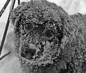 Snow Dog by DemEntOZoone