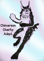 Wildcat Charity Holiday Adopt : Closed