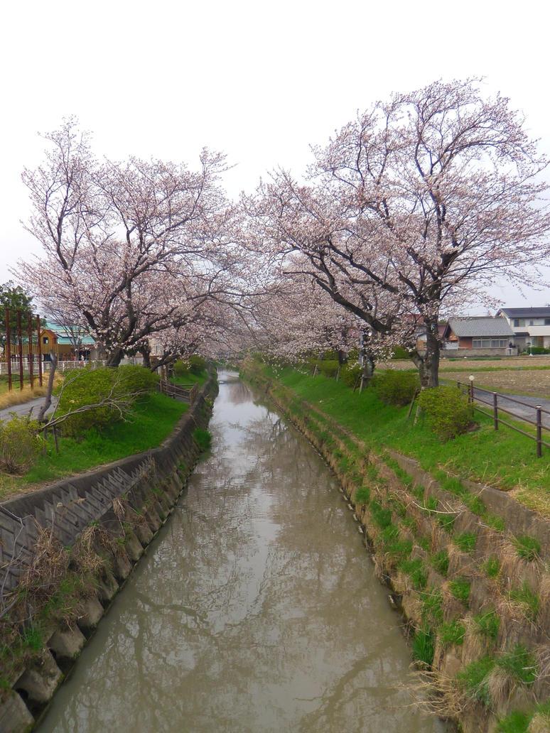 neighborhood sakura by moldypotatoes