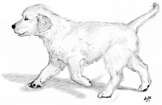 coloring pages golden retriever puppies - photo#34