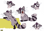 Coral the Raccoon.